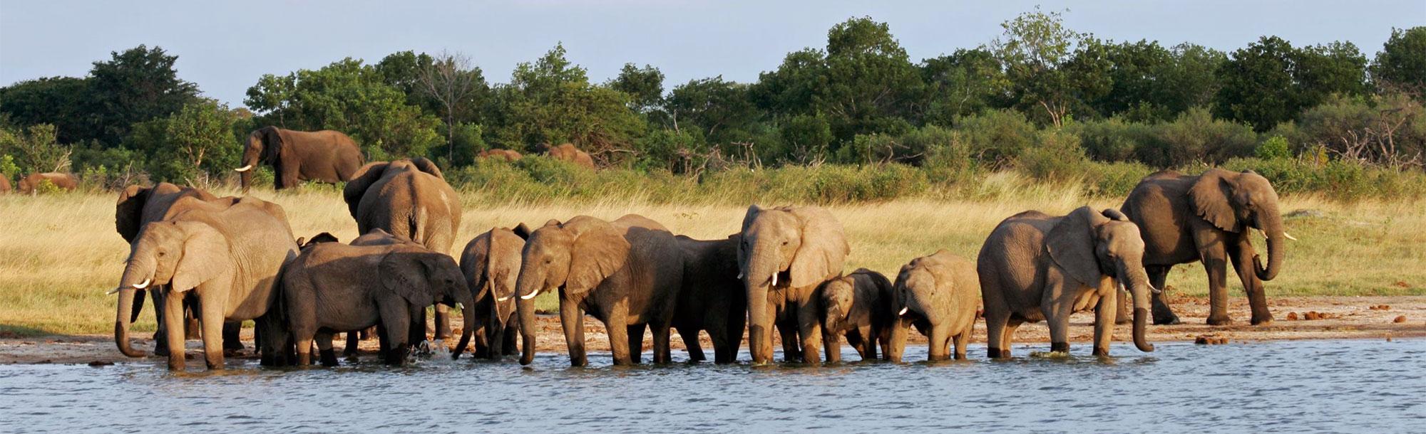 Parc National De Hwange Voyages Sur Mesure En Afrique